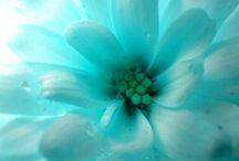 Aqua Blue flowers