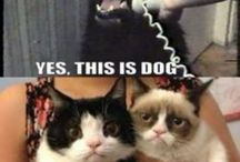 Grumpy cat moments