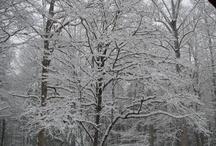 Snow, Deers, Wild life, Flowers,