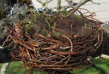 bird nests / nests