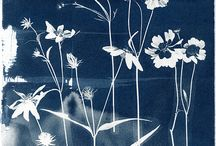 Cyanotype / Cyanotype is a photograph printing process that creates a cyan blue image.  It uses two chemicals:  potassium ferricyanide and ferric ammonium citrate.