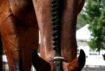 Horse Braids / So beautiful! I want my horse to look like that too!!!