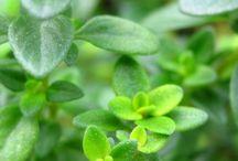 Natural, Herbal Remedies