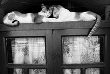 Cats / by Ana Correia