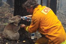 Services/Humans rescue Animals... / Fire Service, S & R, Military forces ...rescued animals in distress... And brave human animal lovers...
