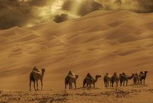 Aavikko ja kamelit