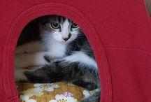 mimos para gatos