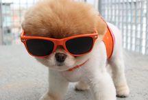Cute doggies :)