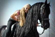 horses & human communication