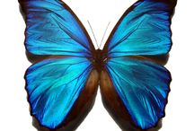 Butterflies / by Pamela Maluga