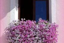 Райские Цветы