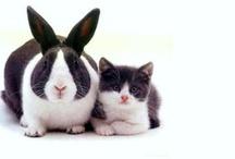 Furry family members