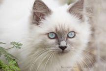 chat de mes rêves