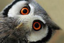 uil / uilen
