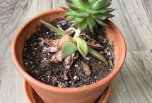 Plantitas | Plants
