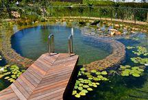 Natural pons and pools