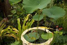 Garden - Inspirational Ideas / Design ideas, quirky ideas - things that inspire me for the garden