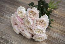 ❤ Garden Roses ❤