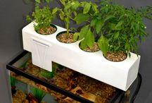 Gardening~Greenhouses / Gardening~Greenhouses~Hydroponics