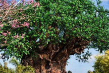 Disney's Animal Kingdom, Walt Disney World / by Disney Images
