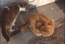 Katzen mit Eichhörnchen