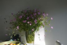 tuinieren: foto's eigen tuin
