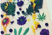 Plantefarvning / Ecoprint