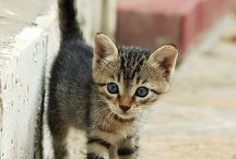 KITTENS / THE CUTEST THINGS IN THE WORLD / by Jackie Walmer