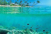 Diving resorts and tips !!,