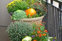 Vegie Planter Ideas