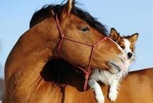 psi a kone