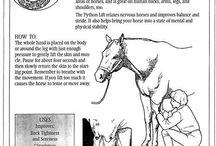 HORSES / by Cindy Kinsella