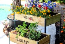 Harvest DIY Projects / Get your hands dirty with these great DIY projects using our soils!