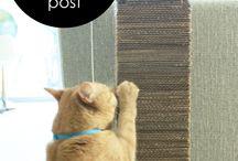 Doe-het-zelf voor katten / Speelgoed en krabgelegenheid voor katten maak je makkelijk zelf!