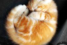 Nagyon cuki cicák / Very cute cats - kittens / Aranyos, szívet melengető, kedves cicás képek. Cute, heartwarming, sweet cat pictures.
