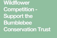 Wildflower Competition with Bumblebee Conservation Trust