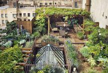Ogrod na dachu