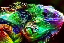 animals and light oh my