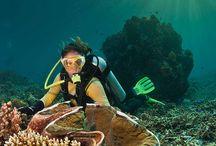 Other Divers experiences :) / Random Pins from other sites  #divingtenerife #diveandsea