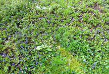 Tavaszi színek / Minden ami a tavaszról szól.