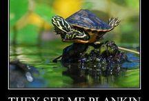 I like turtles / by Caitlen Hale