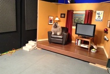 Kobe Bear's TV Debut / by Animal Muse: Cathy Currea