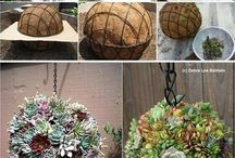 Quirky ways to decorate with succulents