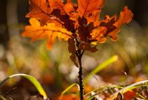 Syksy / Autumn
