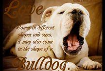 Crazy (bull)dog lady