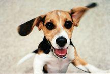 Dog Training Tips, Behavior, Health, and Nutrition