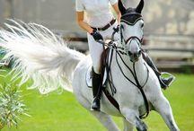 Horses, riders ❤