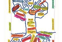 Educación / Métodos para la educacion