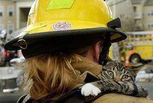 Firemen saving cats