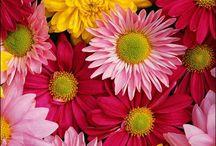 floriiiiicele